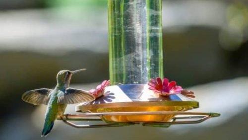 brid eating from hummingbird feeder