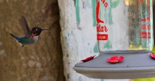 How to Clean Hummingbird Feeders